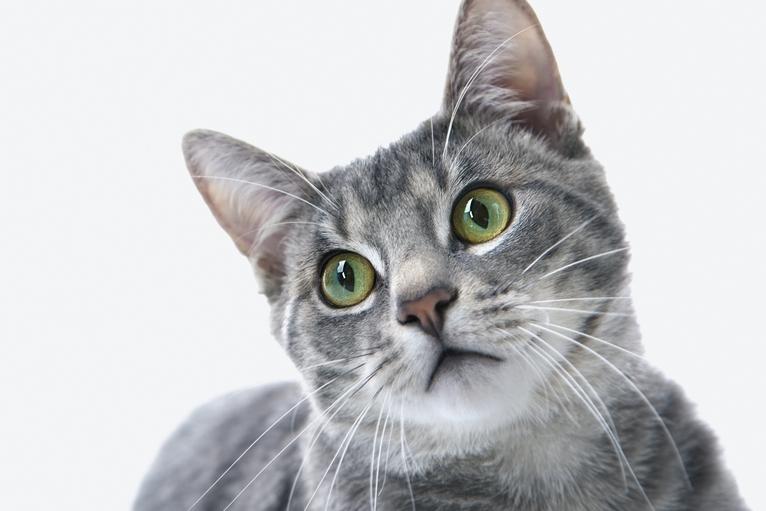 猫のワクチン(予防注射)について