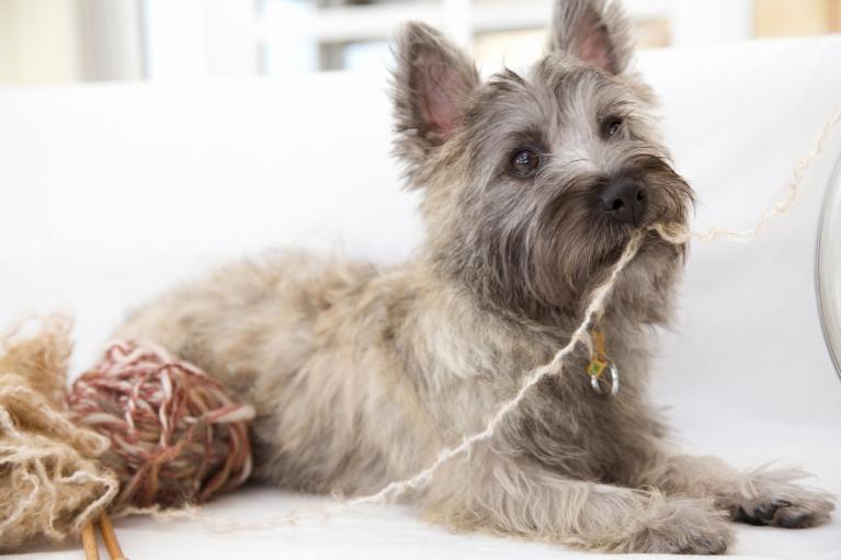 犬の去勢手術・不妊手術について