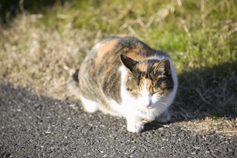 猫の不妊・去勢手術について
