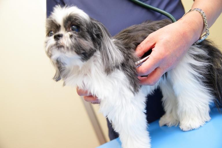 犬のワクチン(予防注射)について