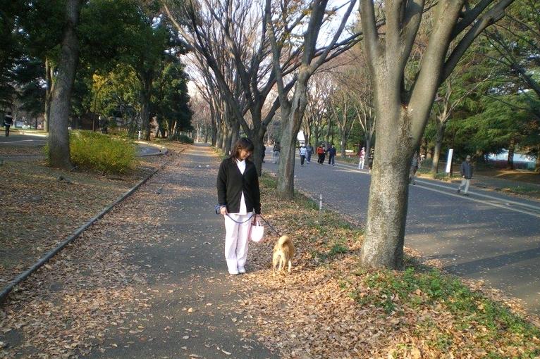 お散歩(オプション)
